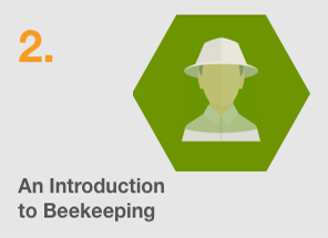 Introduction of Beekeeping