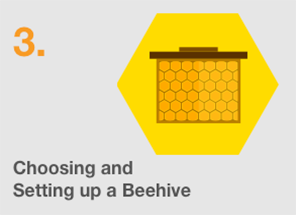 Setting up Beekeeping