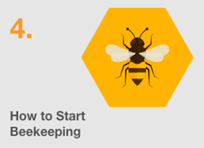The Ultimate Guide to Beekeeping - Arena Flowers