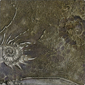 A fossilised ammonite