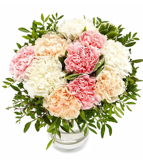 Pastel Carnations