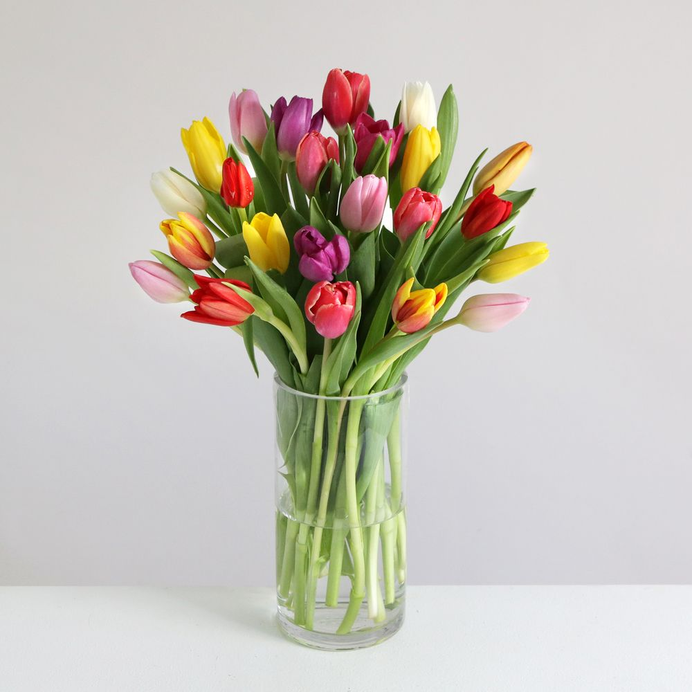 Mixed Tulips - flowers