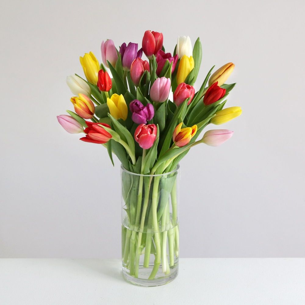 24 Mixed Colour Tulips - flowers