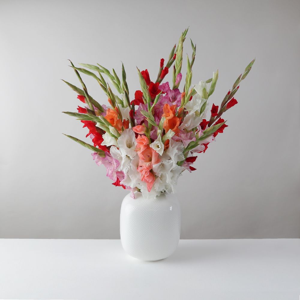 Mixed Gladioli - flowers