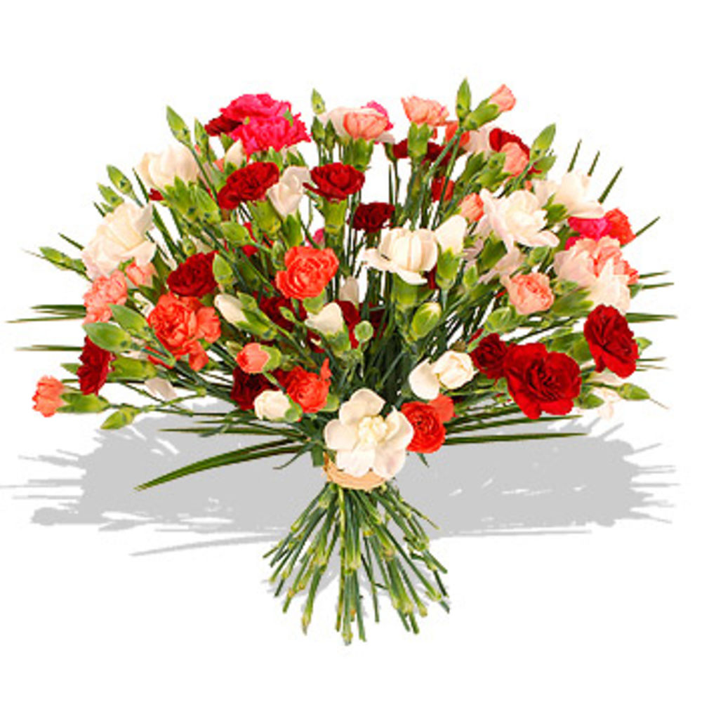 Mixed Carnations - flowers