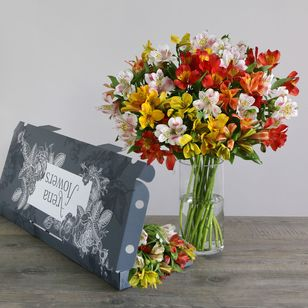 Letterbox Mixed Alstroemeria | Free Chocolate