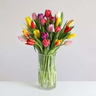 24 Mixed Colour Tulips