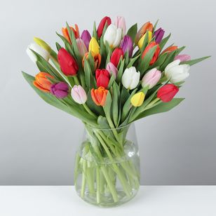 30 Mixed British Tulips