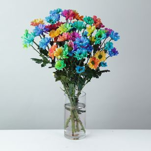 Rainbow Chrysanthemums