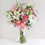 Mixed Lilies - flowers