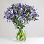 Large Organic Agapanthus Bouquet - flowers