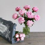 Letterbox Peonies - flowers