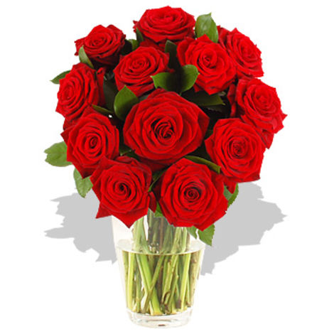 dozen red roses gift wrap