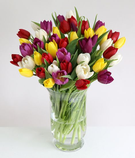 30 MixedTulips