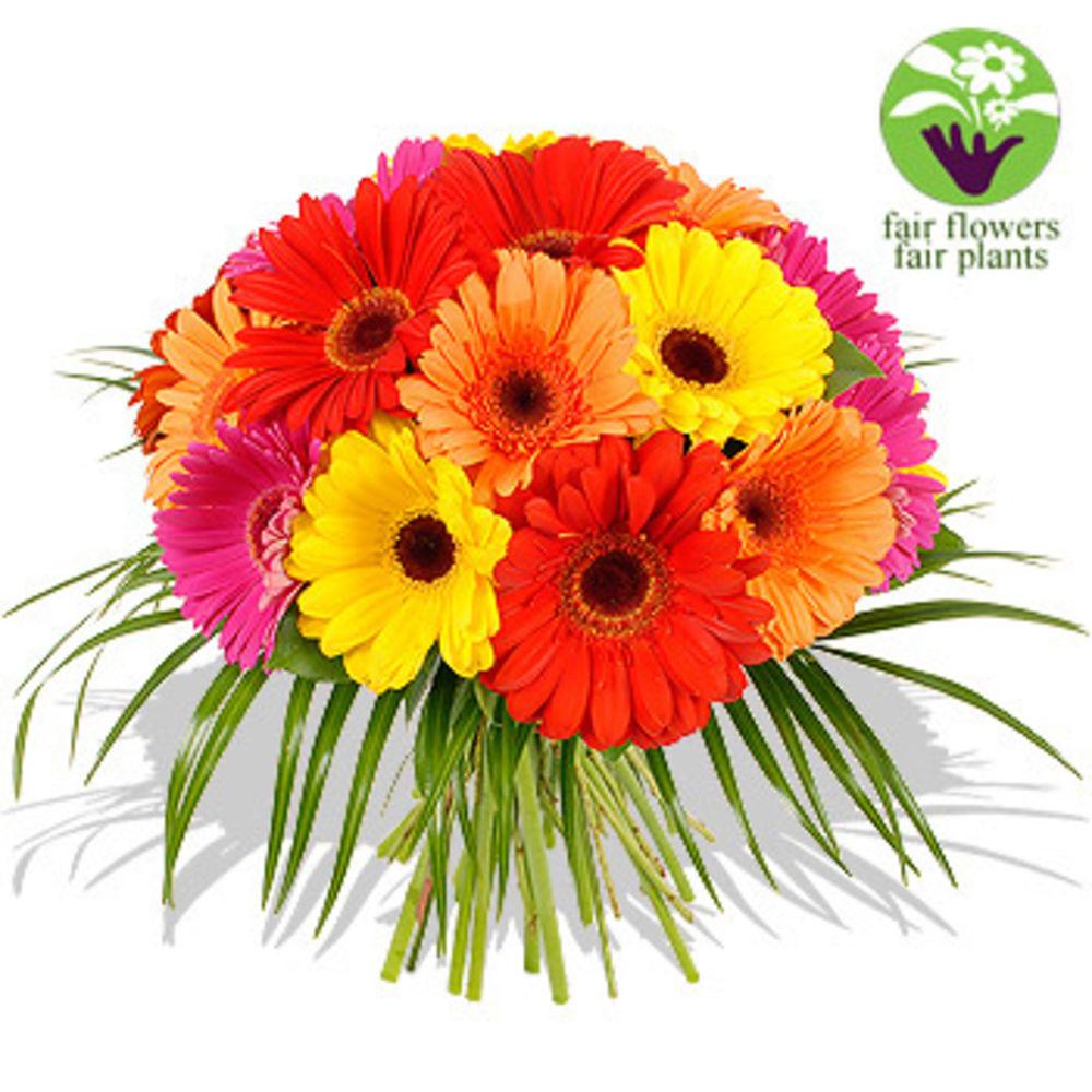 Image of Gerbera Bouquet + Free Vase - flowers